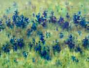 Penstemon 24x36 $1,500