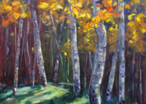 Backlit Aspens in Fall  30 x 24  (Sold) $1100
